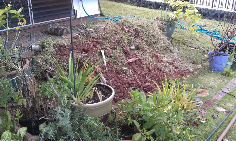 """The """"mound"""" with added clippings and compost."""