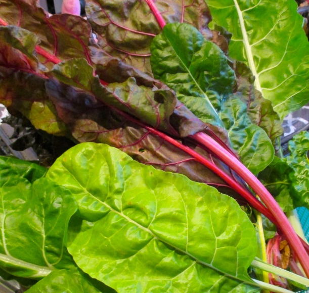 Rainbow Swiss Chard, cut from the garden 15 minutes before cooking :-)